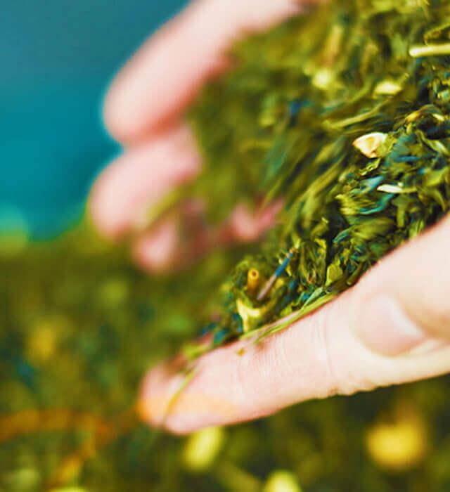 最高級の台湾茶、天仁茗茶の茶葉を使用。